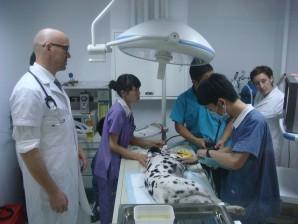 pet clinic beijing doctors beck & stone