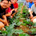 Some time ago, I made a quick presentation of the Haobao organic farm, delivering south China's vegetables in Beijing. This initiative is inventive but not that isolated, and this post […]