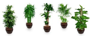 Popular plants to reduce air pollution