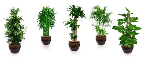 plants for office space. brilliant office popular plants to reduce air pollution inside plants for office space