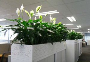 Plants to reduce stress in the office