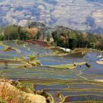 Yuanyang rice terrace fields in Qingkou village